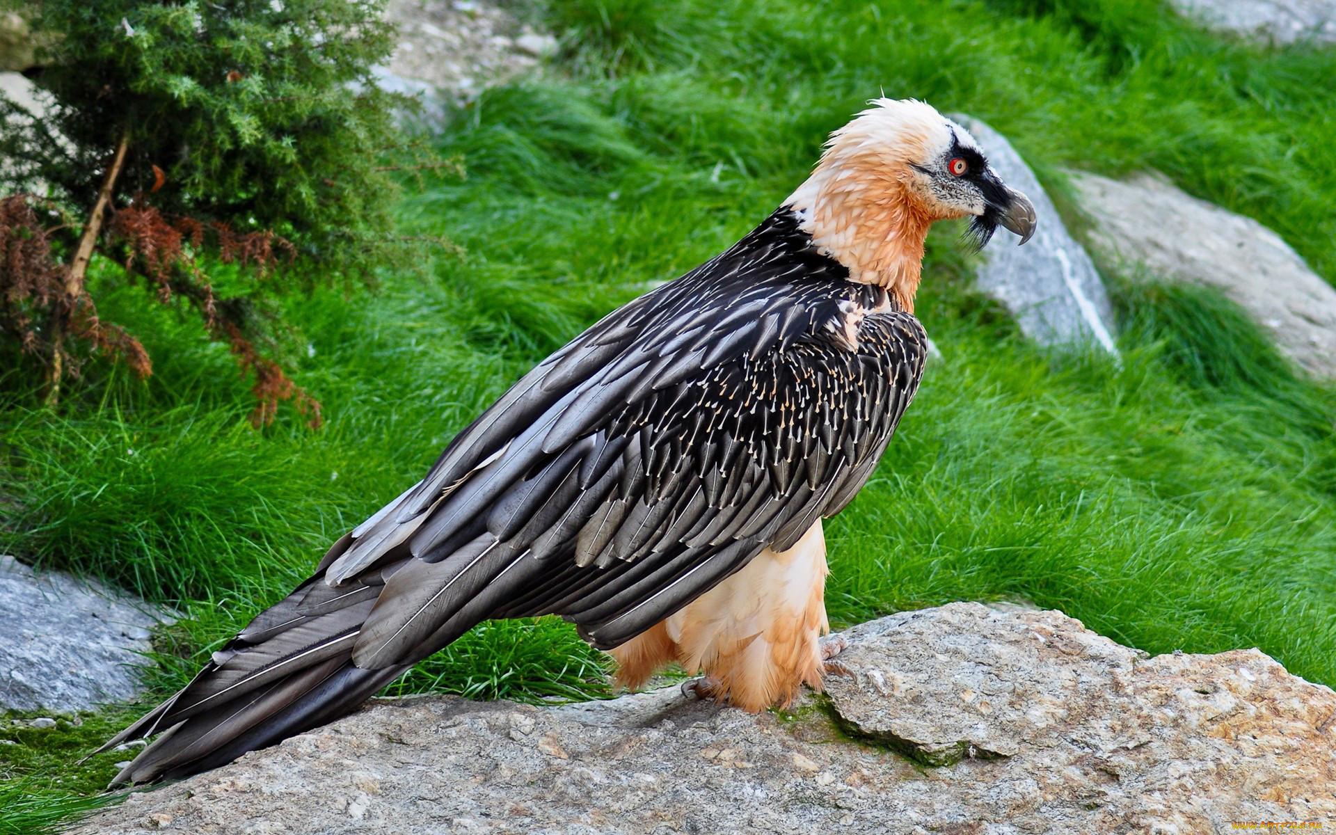 птицы и животный мир европы фото для любителей быстрых